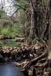 Lesson 10: Wetlands
